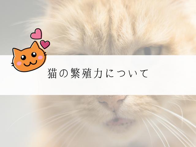 猫の繁殖力タイトル