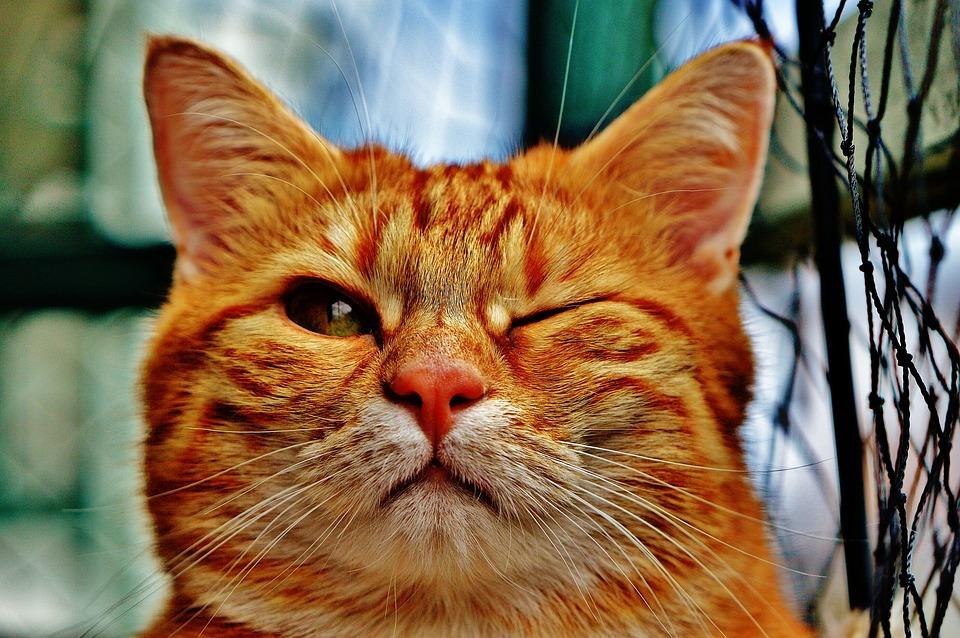 猫よけネットで中に入れない猫