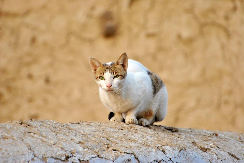 花壇を狙う猫