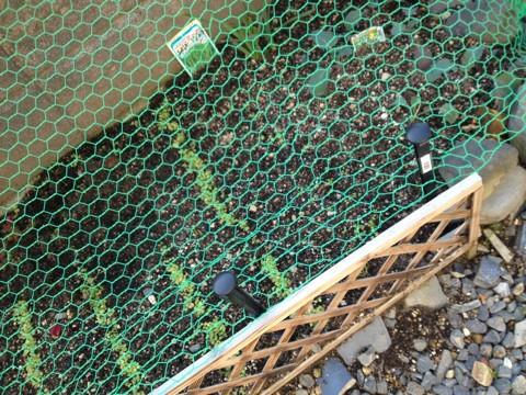 猫よけネットを張った花壇 引用
