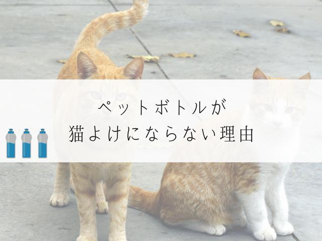 ペットボトルを見つめる猫たち