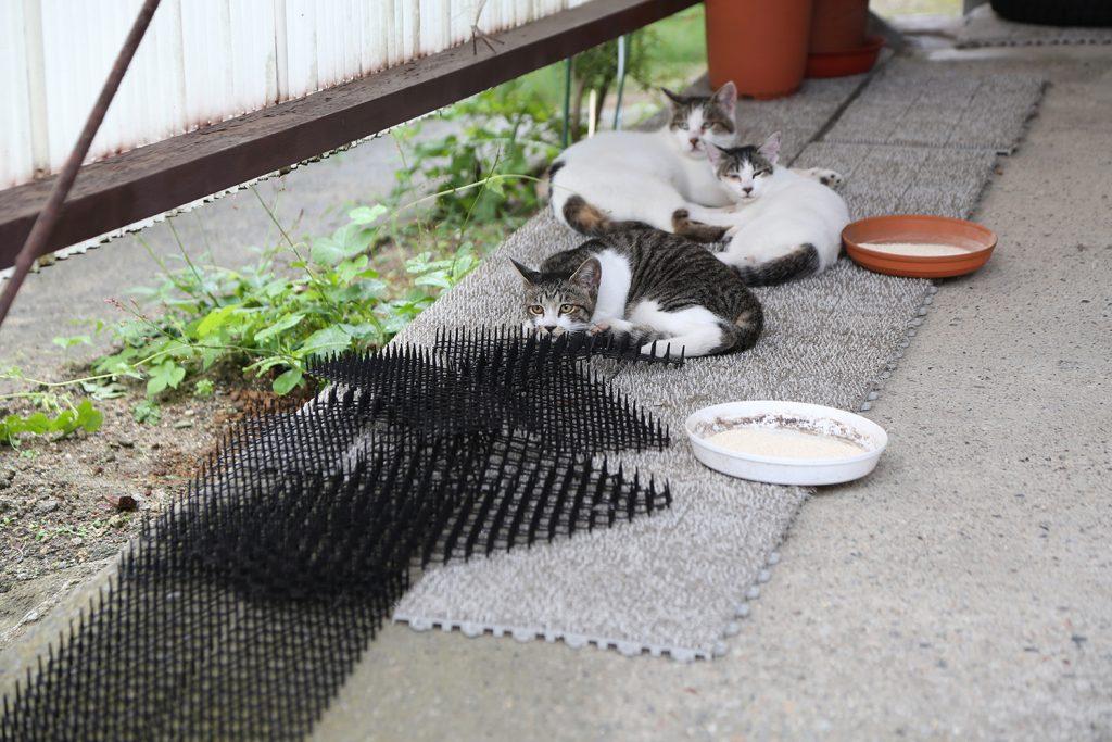 猫避けマットの横で寝る猫たち