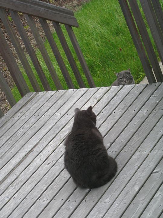 ウッドデッキでにらみ合う野良猫