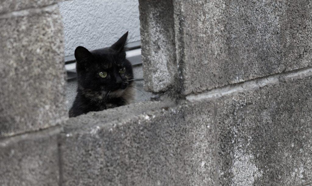 忌避剤で家に入れない猫