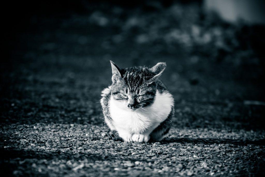 猫よけにびくともしない猫