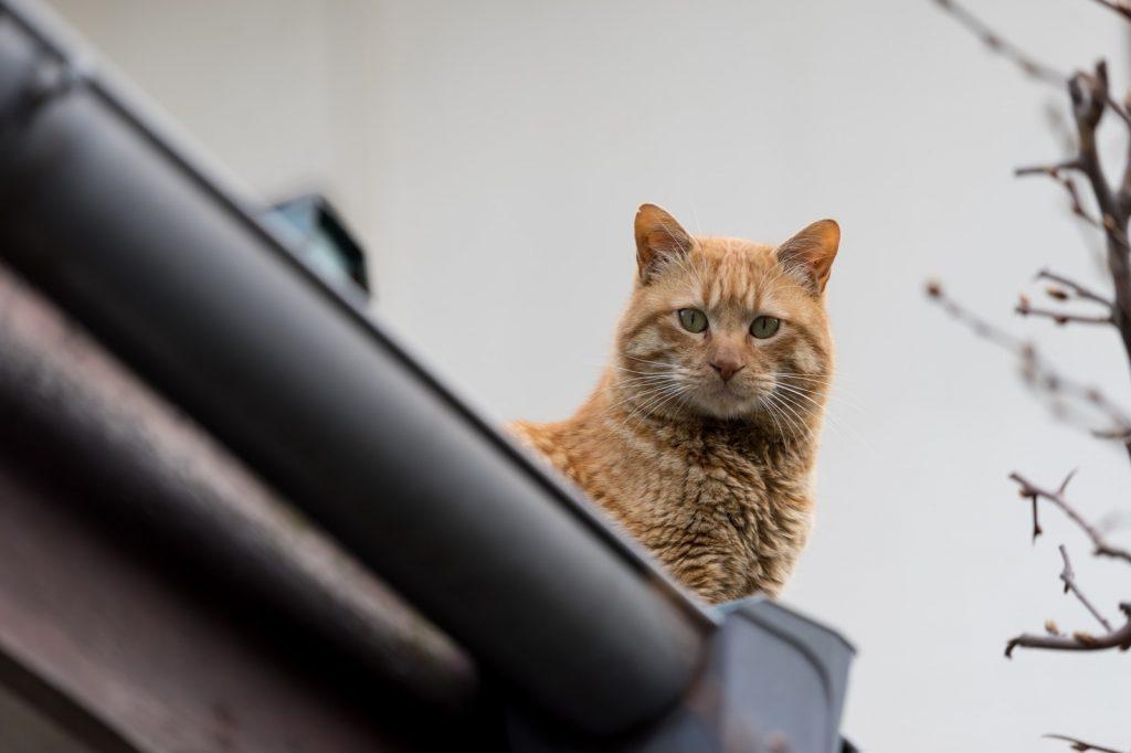 観察する野良猫