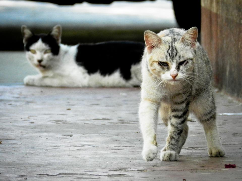 厳しい目つきの野良猫