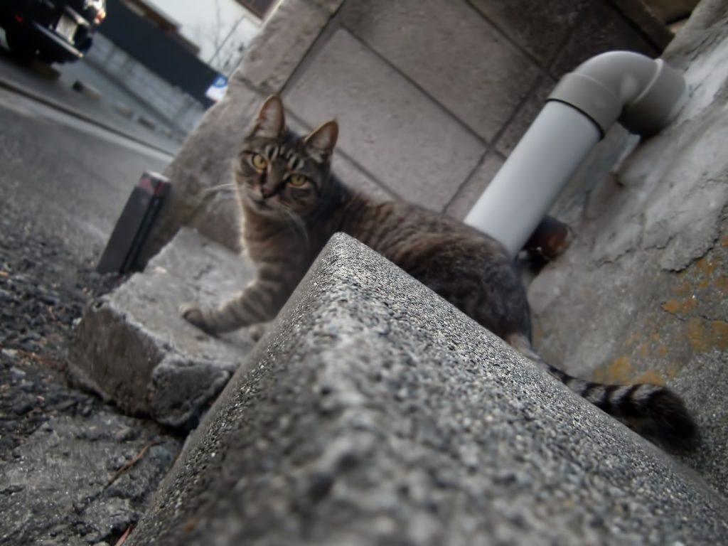 車を狙う猫