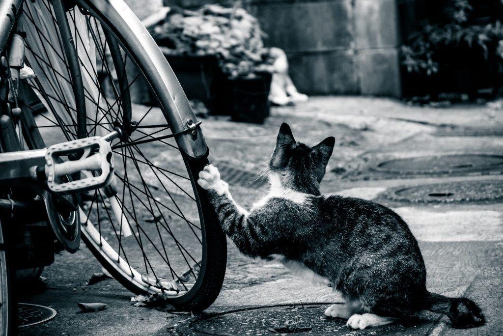 自転車で爪とぎをする野良猫