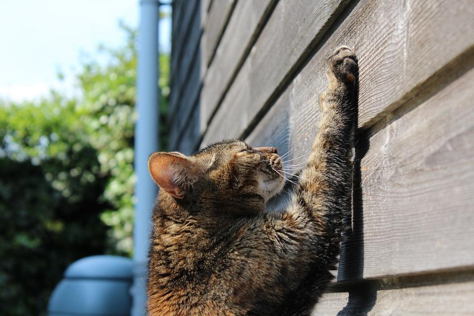 フェンスに爪とぎをする猫