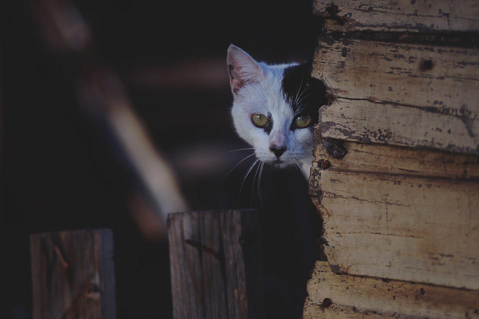 猫よけスプレーを観察する猫