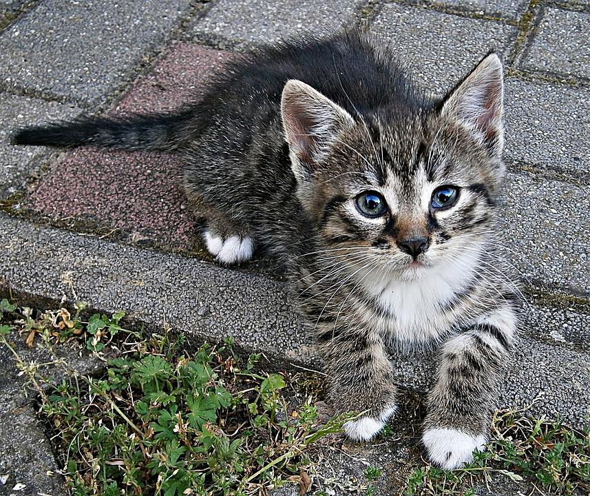 野良猫の子猫