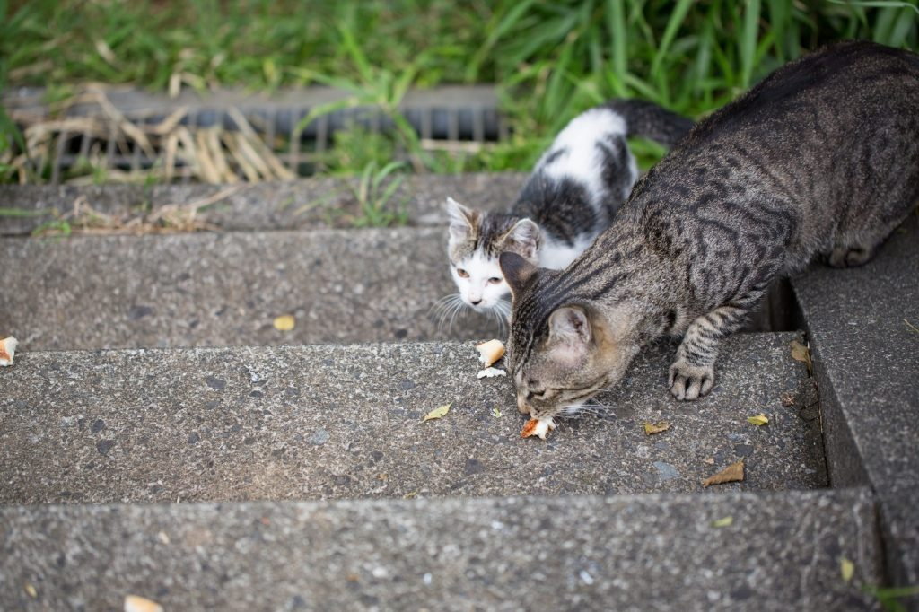エサを食べる野良猫