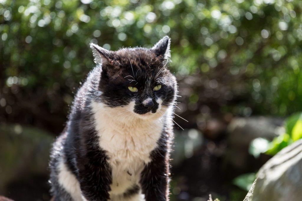 タイプのつかめない野良猫