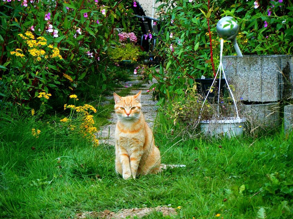 朝、庭に侵入したら人に見つかった野良猫
