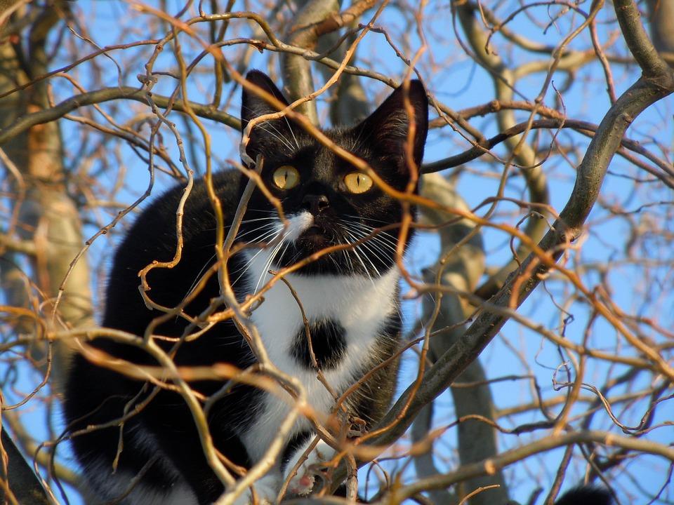 あなたの庭を狙う猫