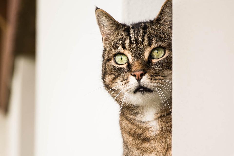 おびえた目の猫