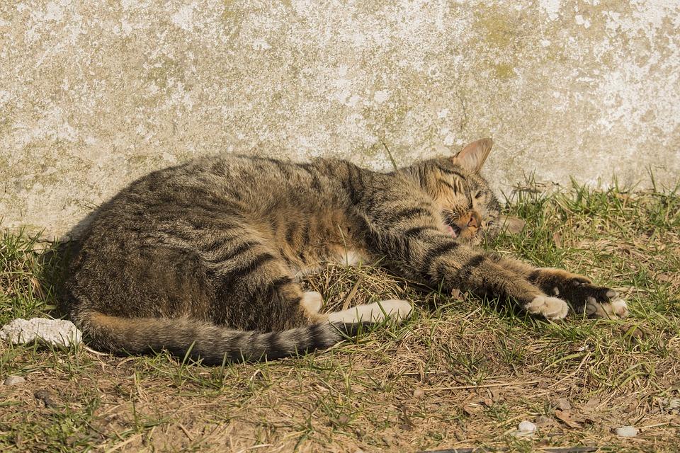 あなたの庭で寝転ぶ野良猫