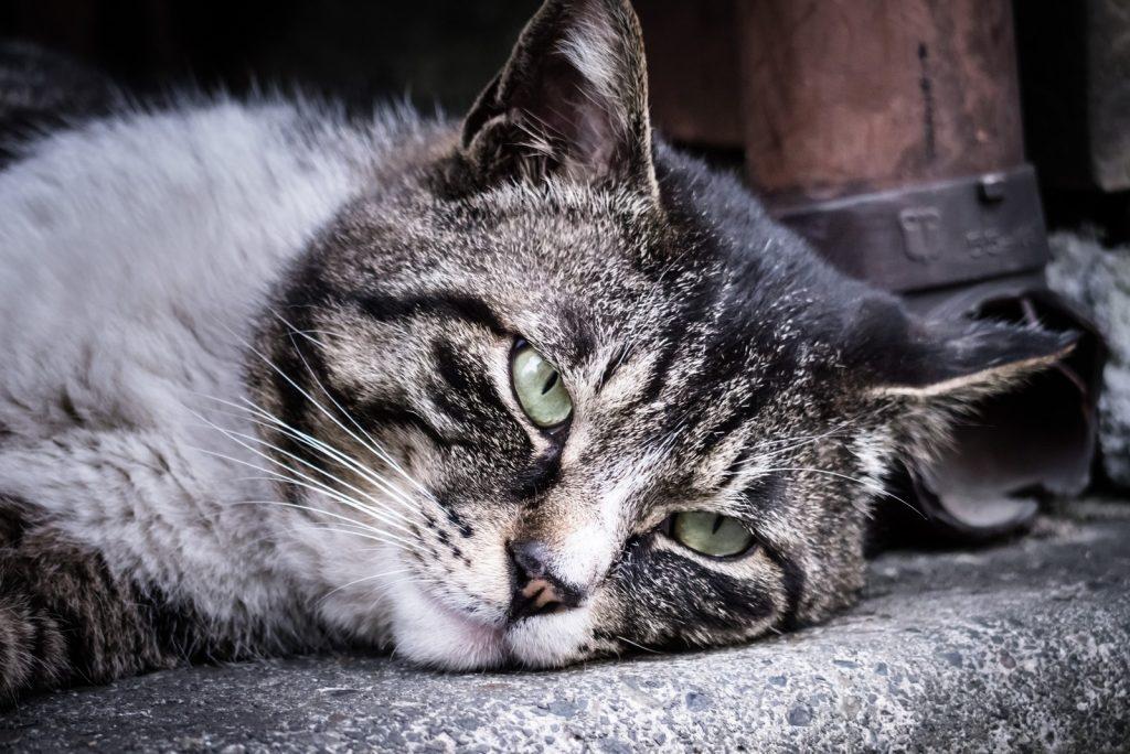 昼寝をする野良猫