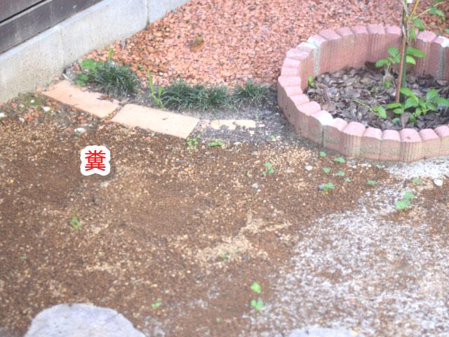 猫の糞がある庭