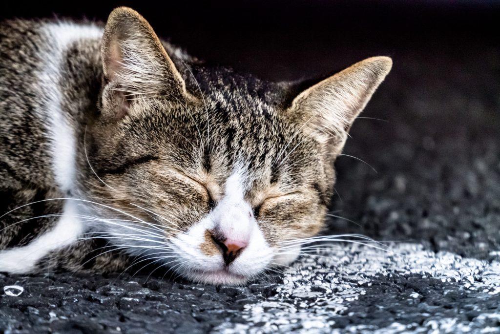 車の下で寝ている野良猫