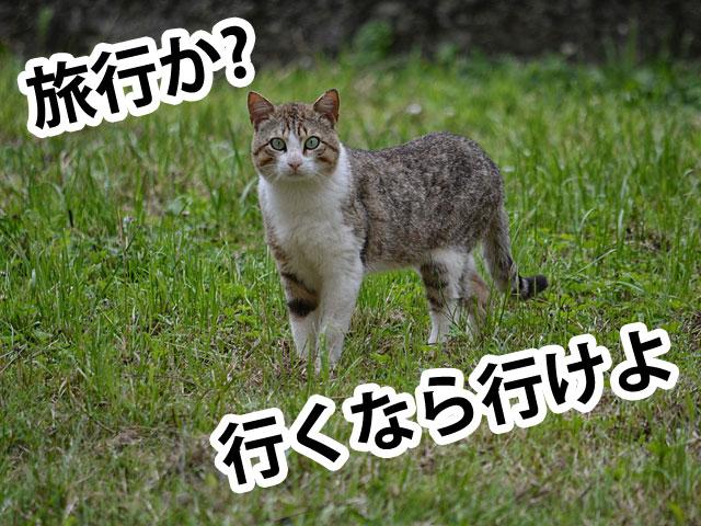 旅行後の民家を狙う猫
