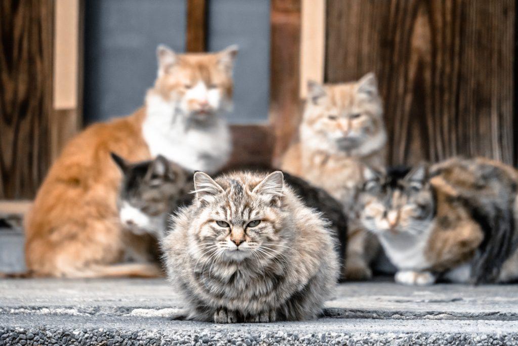 猫よけグッズを観察する猫軍団