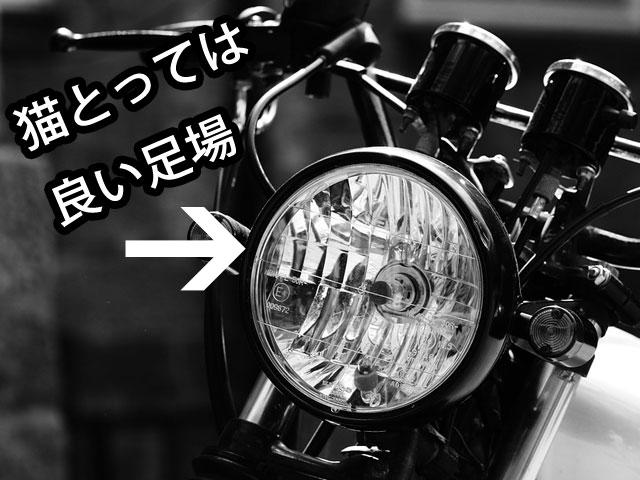 猫に狙われたバイク