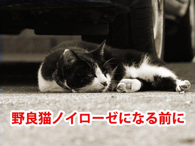 嫌がらせをする野良猫