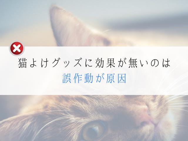 猫よけグッズを観察する猫