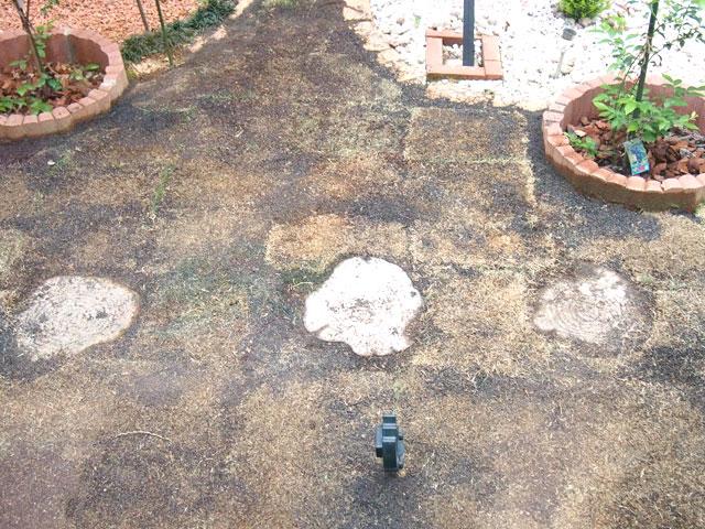 芝張りをした庭と番人くん