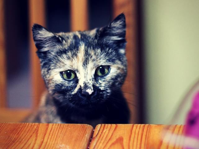 まだらな毛並みの飼い猫
