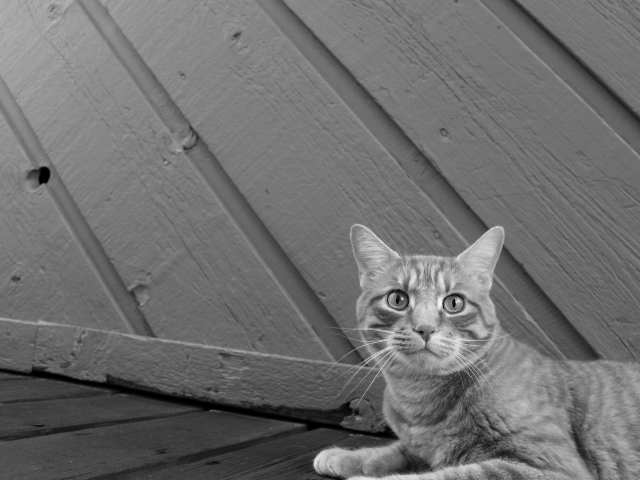怯えた目の野良猫