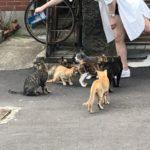 猫に餌をやる女性