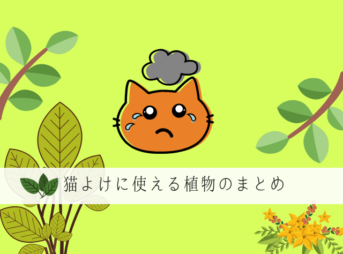 猫よけの植物