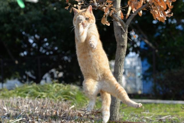 猫の身体能力は高い
